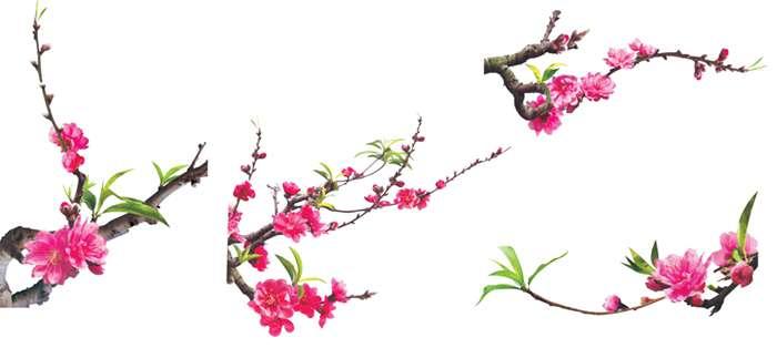 hình hoa đào
