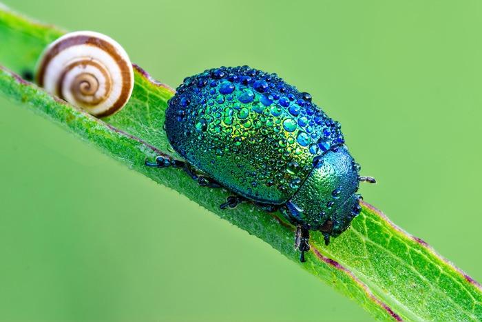 Hình nền máy tính 4k Beetle